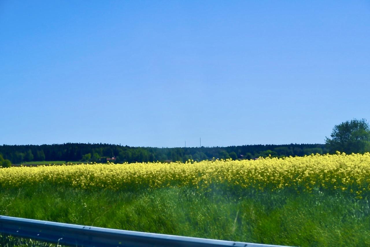 Uppsalaslätten mötte oss med skir grönska, ljuvligt blå himmel och vackra tapsfält. Ett gott tecken på en lyckad dag .