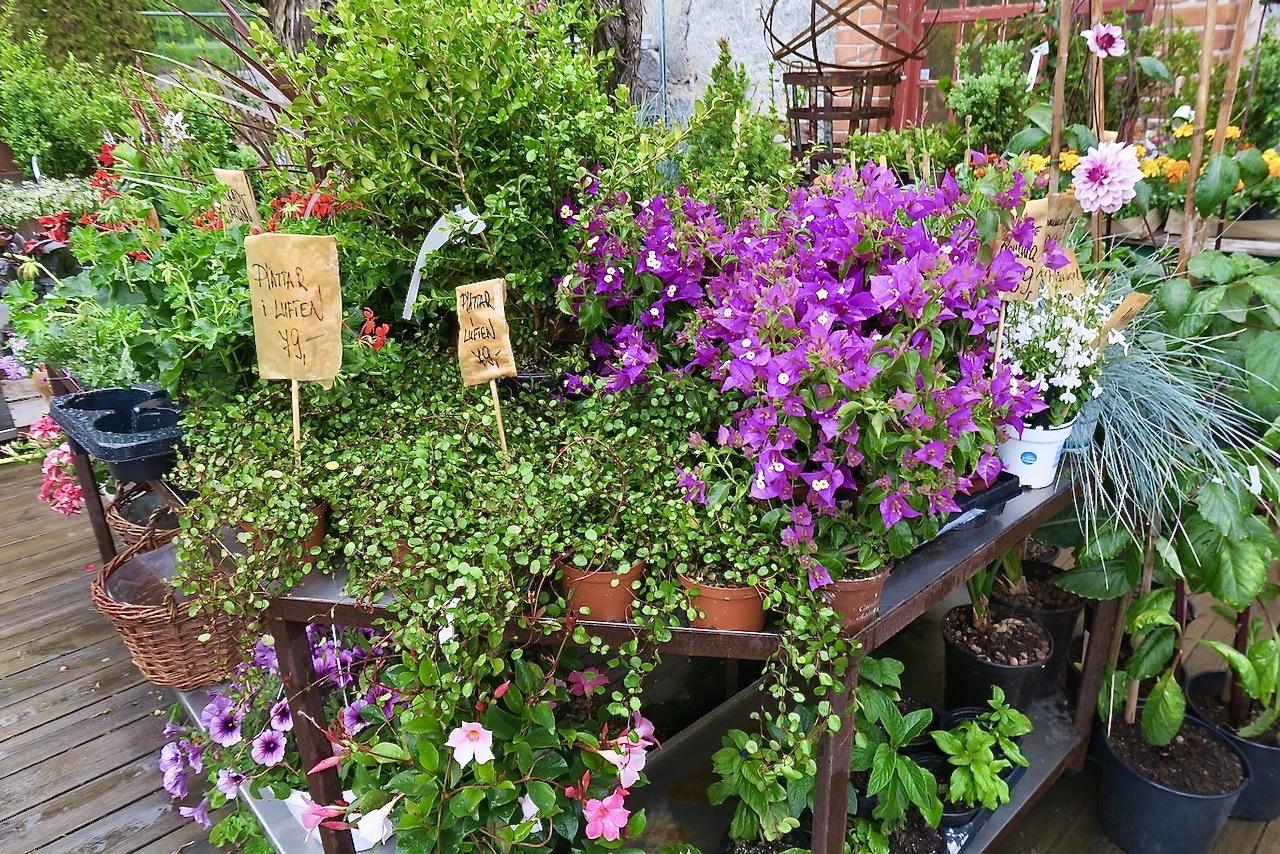 Steninge trädgårdsmästeriet. Blommor av olika slag som trivs fint tillsammans.