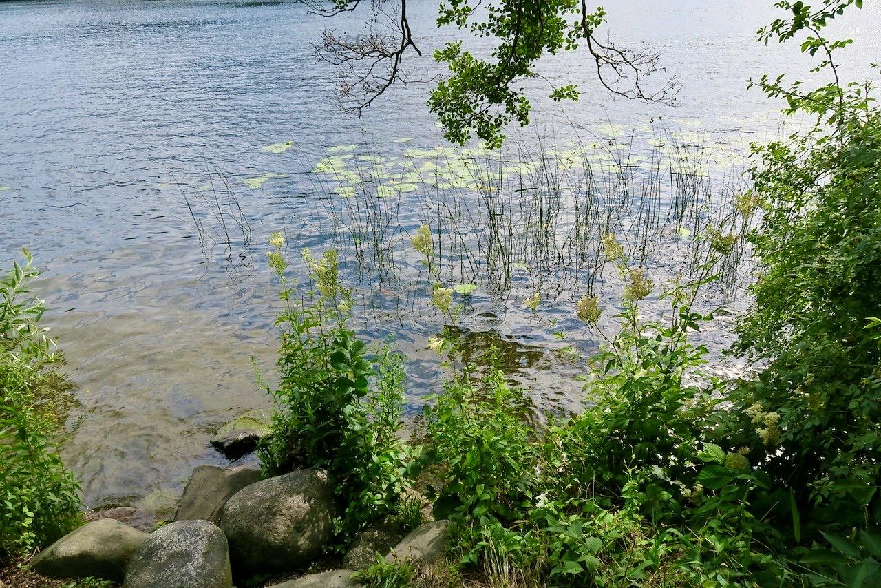 Södermalm. Stockholm. Jag letar mask vid Årstaviken och vänder på de stenar jag ser.