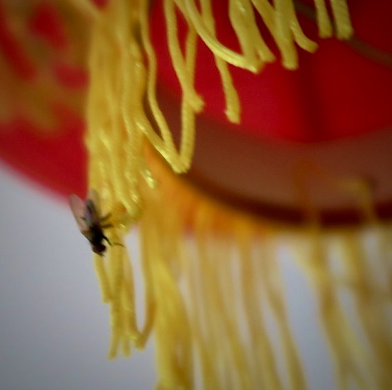 Stockholm. Södermalm. Balkong. En fluga har anlänt till en av våra kinesiska lyktor.
