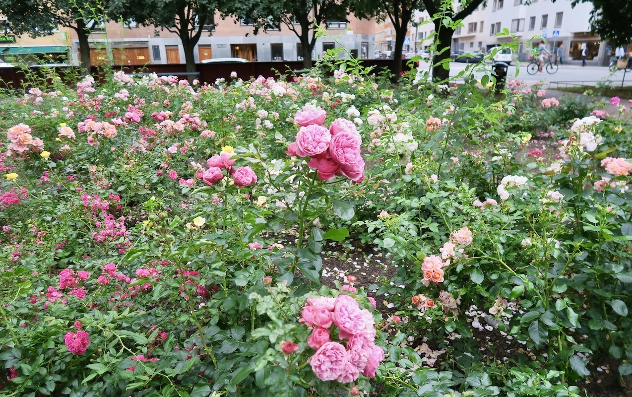 Stockholm. Södermalm. En rosornas park. Axel Landquists park.