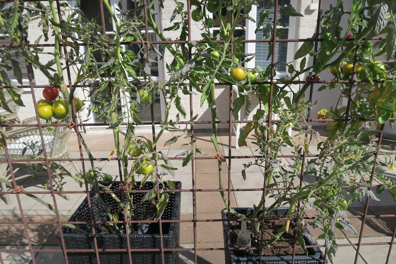 Gästrikland. Högbo bruk. Staket i järn för bl.a. tomater. tillverkat här på bruket skulle jag gärna ha hemma.