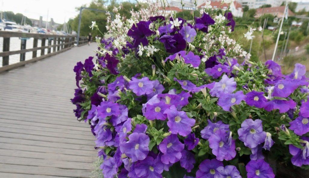 Stockholm. Södermalm. Årstaviken. Att det är sensommar märks på de blommor som nu pryder broräcket .