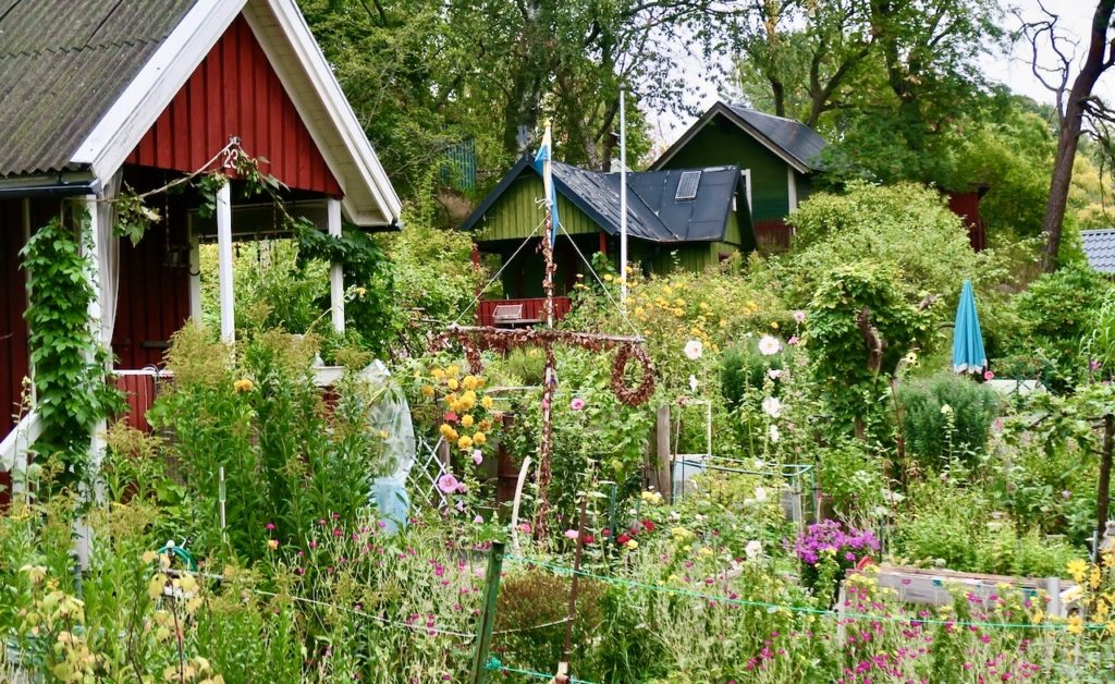 Stockholm. Södermalm. Eriksdalskundens koloniområde. Och visst lyste det grönt i trädgårdarna.