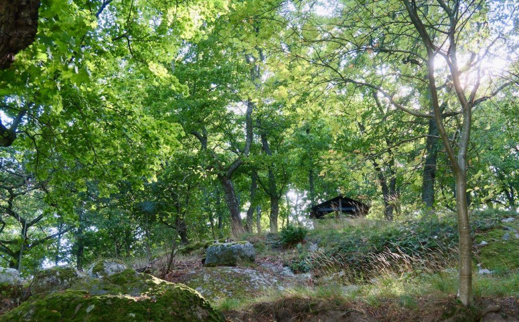Stockholm. Kunliga Djurgården. Jag närmar mig Rosendals Trädgård. Tittar efter svamp. Men ingen svamplycka.