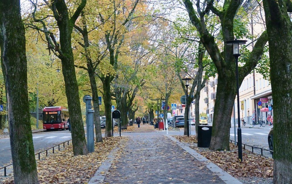 Stockholm. Södermalm. Katarina Bangata. Hela gatan är i princip en allé.