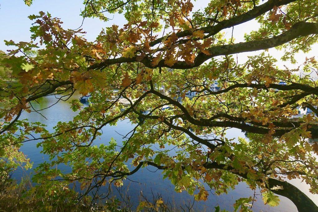 En ljuvlig dag på Djurgården som kändes som brittsommar trots att det var några dagar frö tidigt.