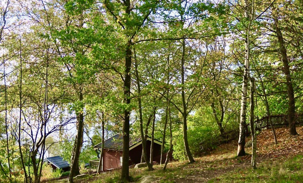 Stockholm. Södermalm. Årstaviken. Kontraster. En del träd har kvar sina gröna löv och på andra träd är de gula eller har släppt taget.