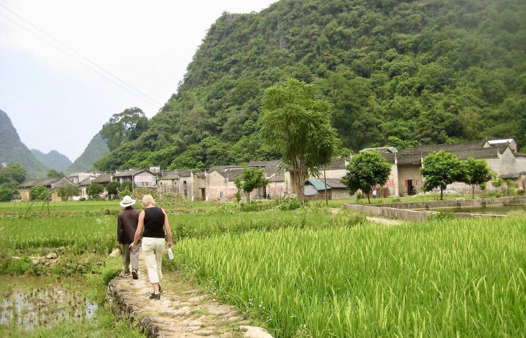 Södra Kina. Yangshuo- Vi går över en åker fylld av risplantor.