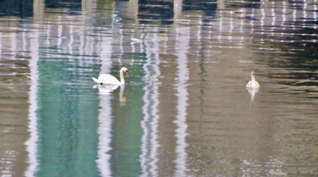 Stockholm. Södermalm. Långsant gick jag vidare hemåt och stannade vid kanalen för att se svanarna och de randiga speglingarna i vattnet.