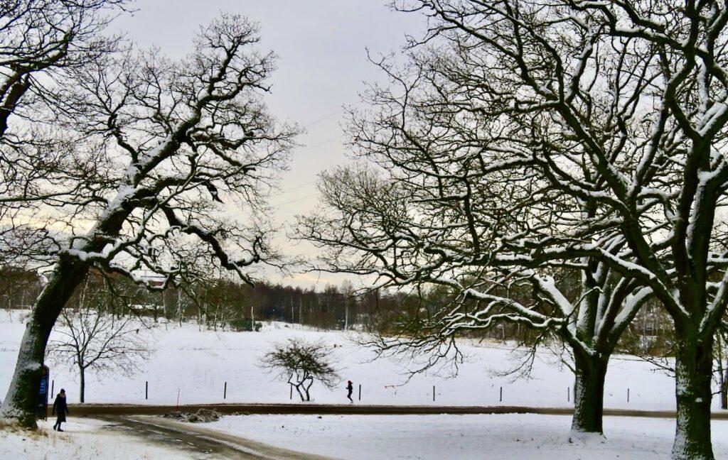 Stockholm. Kungliga Djurgården. En del av Stora Skuggan som ligger i den norra delen av Nationalstadsparken.