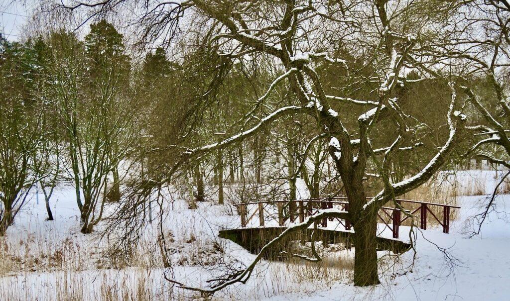 Stockholm. Norra Djurgården och Stora Skuggan. Och snön lyste upp så fint.