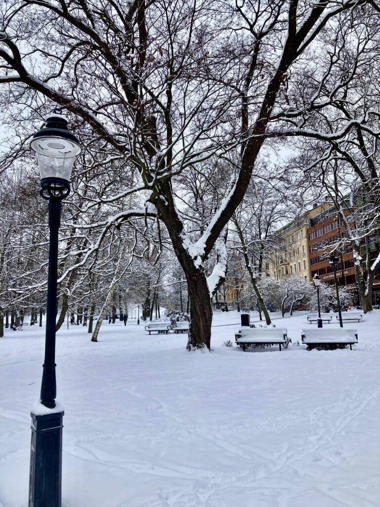Stockholm. Humlegården. En av flera fördelar med Stockholm är alla grönområden. Just nu dock vita.