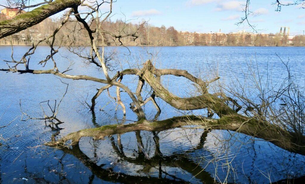 Stockholm. Sjön Trekanten erbjuder en fin strandpromenad runt hela sjön. En sträcka på 2 km.