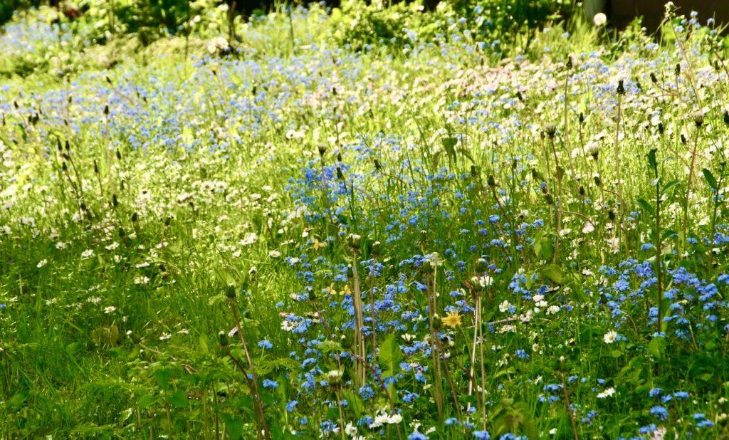 Stockholm. Södermalm.Årstaviken. Blomsterängar finns också helt nära där vi bor.