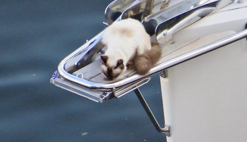 Stockholm. Södermalm. Hammarbykanalen. Här har en katt valt att parkera sig i fören på en segelbåt.