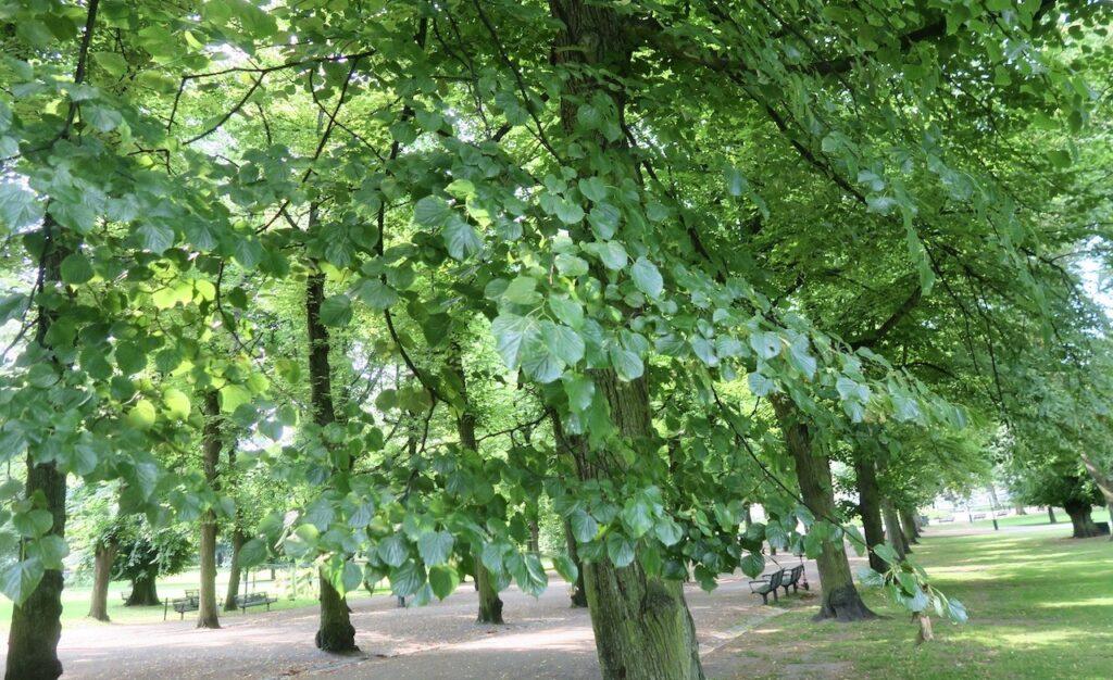 Stockholm. Humlegården. En ytterst svag vind fick löven på träden att darra.