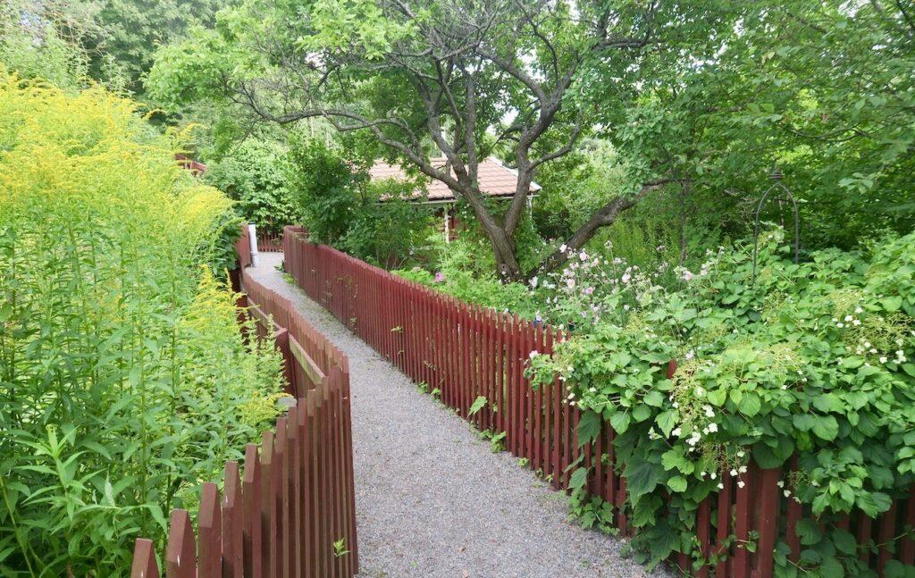 Södermalm. Eriksdalslundens koloniområde. Jag stosar på de grusfyllda gångarna och tar in alla dofter sommaren bjuder på.