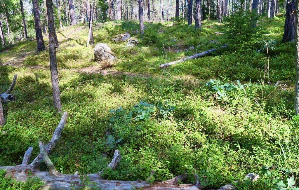 Nacka. Nyckelvikens naturreservat. På väg not Nyckelvikens trädgård och herrgård.
