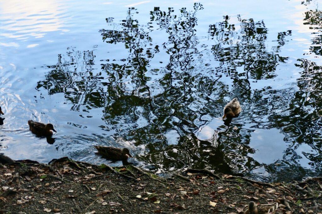 Årstaviken. Södermalm. Stockholm. Roligt att se hur den sol som fortafarande är pigg och vaken ger vattnet en speciell blå nyans.